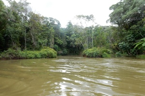 """Our duckboat's """"road"""" through the rainforest."""