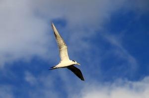 Seabirds over the wharf