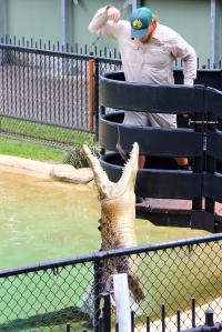 Jump, Munga! Jump!