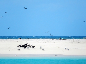 Our travels would take us first to Michelmas Cay - a tiny sandbar of an island that serves as a protected sanctuary for seabirds