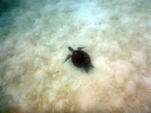 Our sea turtle encounter count totalled up to 6 by the end of the afternoon