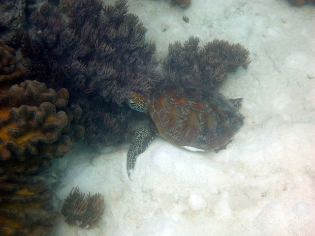 This guy was just hanging out and resting on the ocean floor by that little coral bed