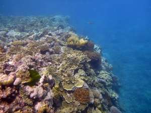Suddenly the sandy, coral-peppered floor of Michelmas was replaced by the coral walls and total coverage of Hastings Reef
