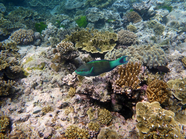 The crunshing of the Parrotfish as they chomped on the coral skeletons was really loud and a little unsettling if you didn't know exactly what it was.